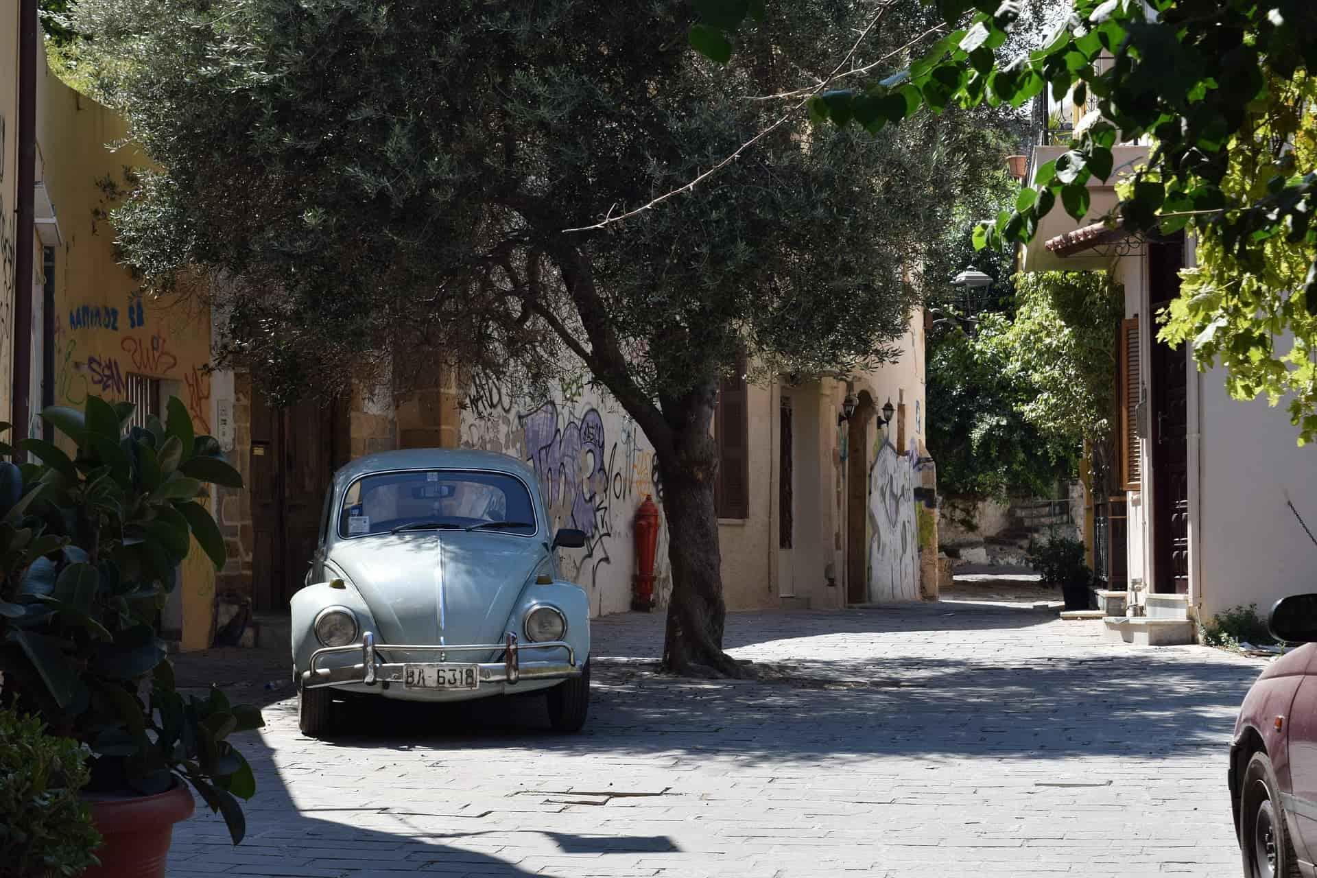 Olive tree on street Chania